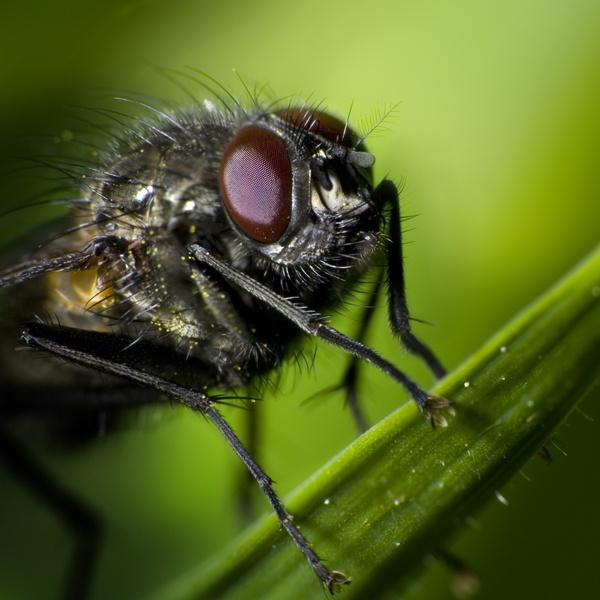 The Fly by GARYHICKIN