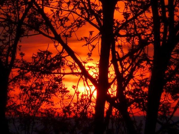 Tangled Tree Sunset by seaviewlou