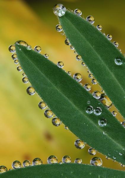 Rain drops by savo