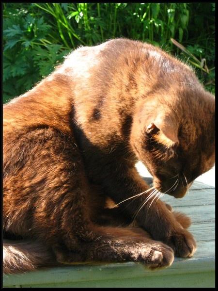 Sun in his fur by pattycake