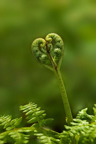 Love Fern by Bexphoto