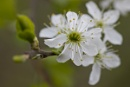 back garden blossom-1 by loweswood