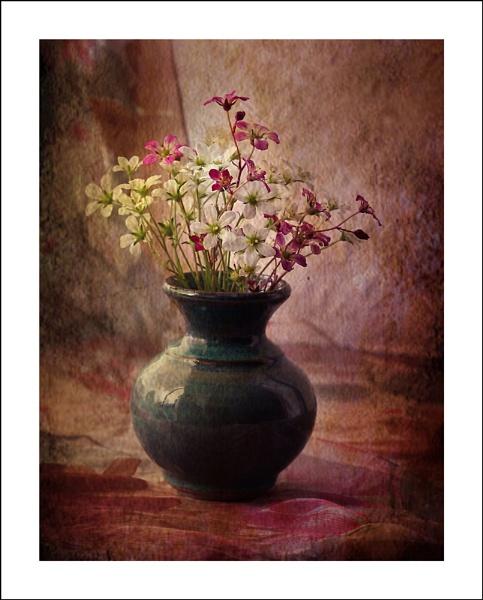 Alpine Flowers by TeresaH