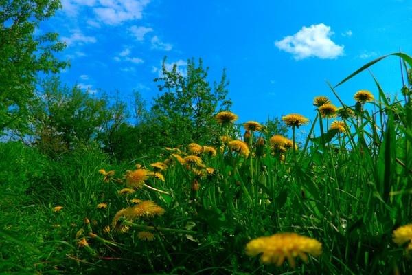 The Spring Has Sprung!!! by romancos