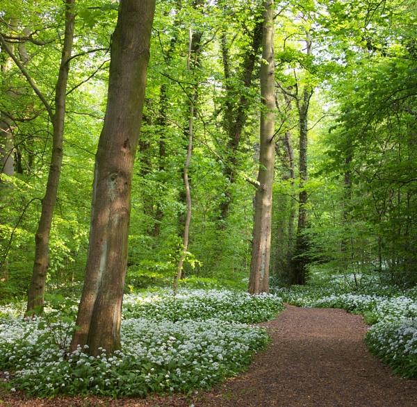 woodland walk by Barbaraj