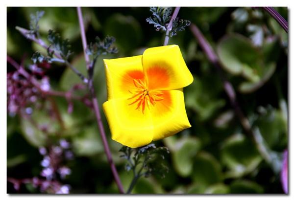 Flowers by Bob_V