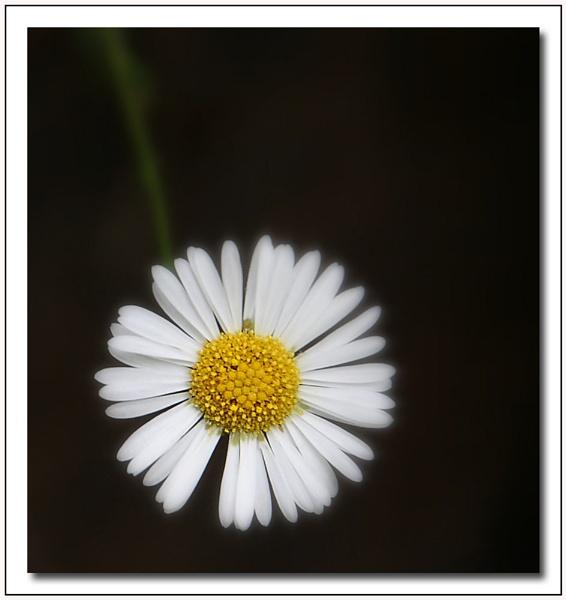 **Flower** by Bob_V