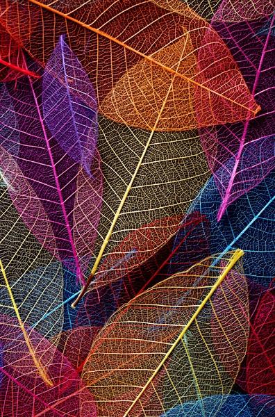 Rainbow Skeleton Leaves by Tonksfest