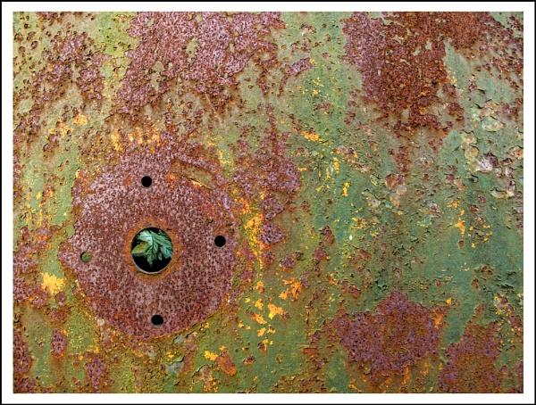Rust & leaf by AlanTW