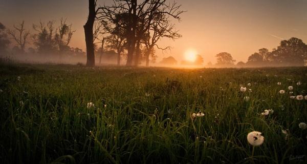 *Salute to the Sun by Mynett