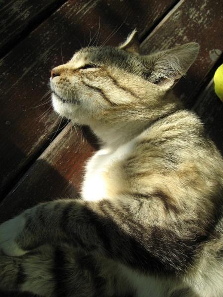 Sleepy Cat by nonur