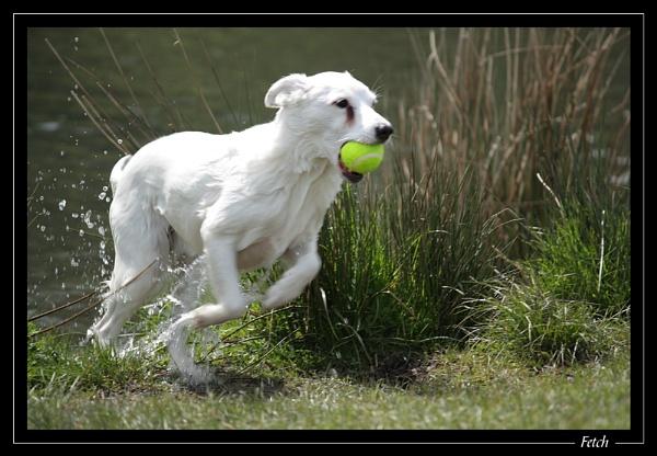 Fetch by jjmorgan36