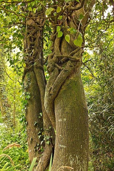 Tree Huggers by heids