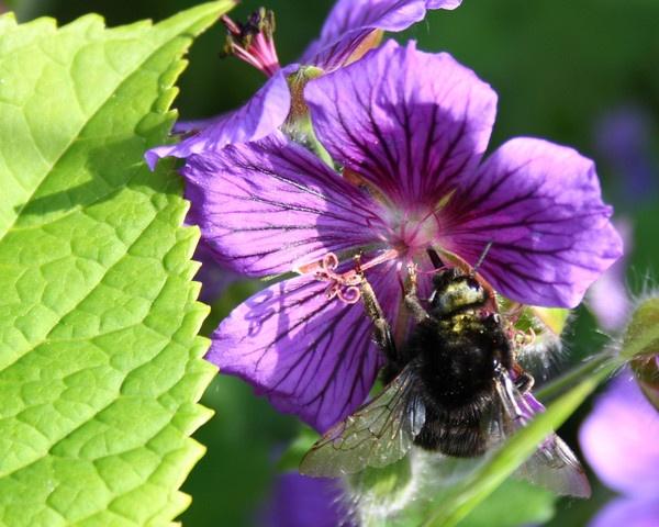 busy bee by cricketcaz
