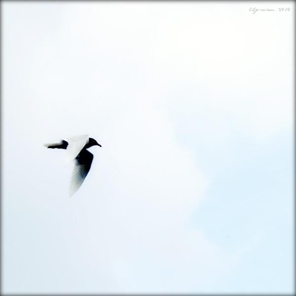 In Flight by LilyWren