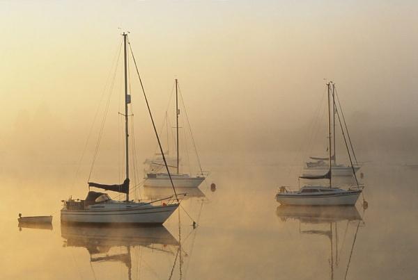 Mist & \'White Magic\' by Amanita05
