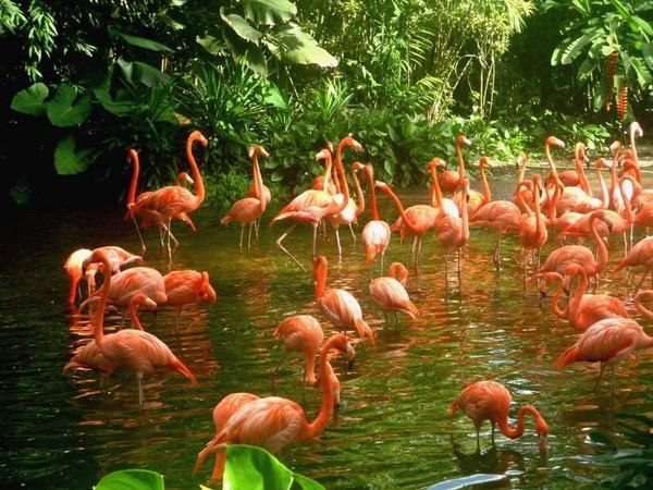 Flamingo Party by jessikerr
