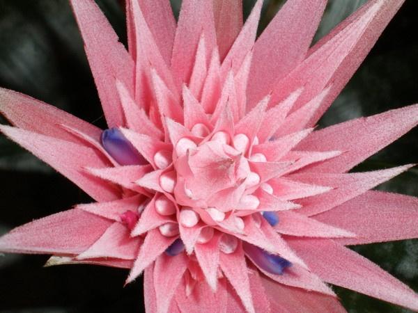 flower by Virna