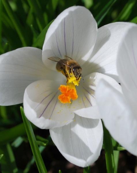 Pollen collecting by Starfizz