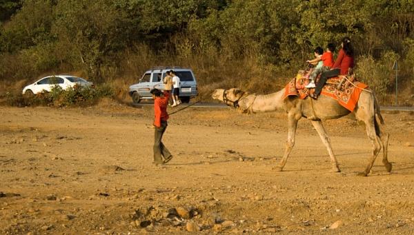 Camel Ride by devlin