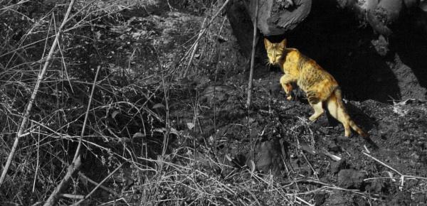 Feline on the prown by devlin