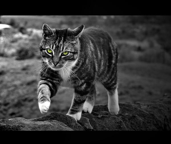 The Hunter.. by woodlark
