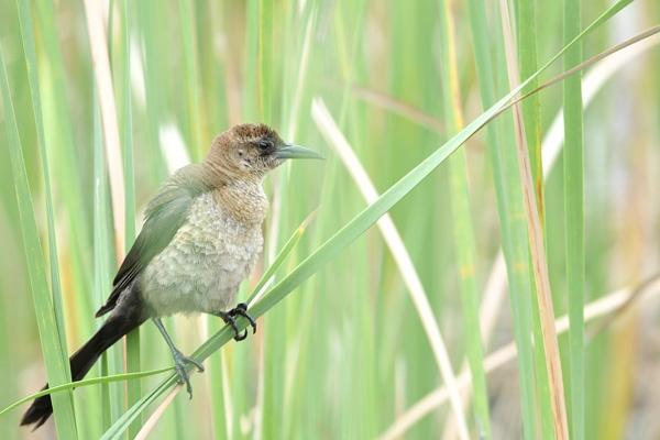 Everglades Bird by burd
