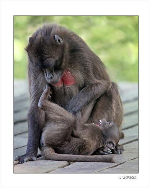 it tickles !! by SueTurner
