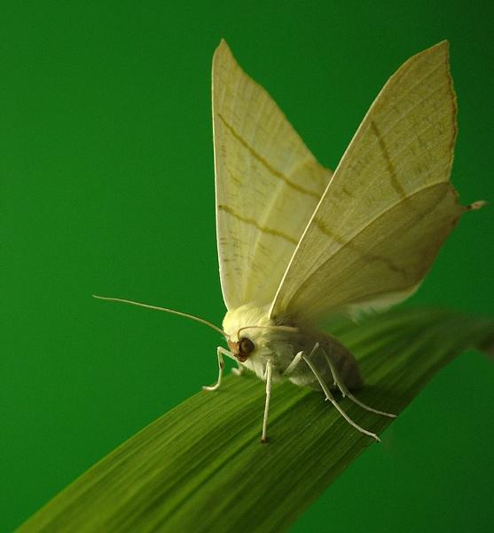 Moth by cattyal