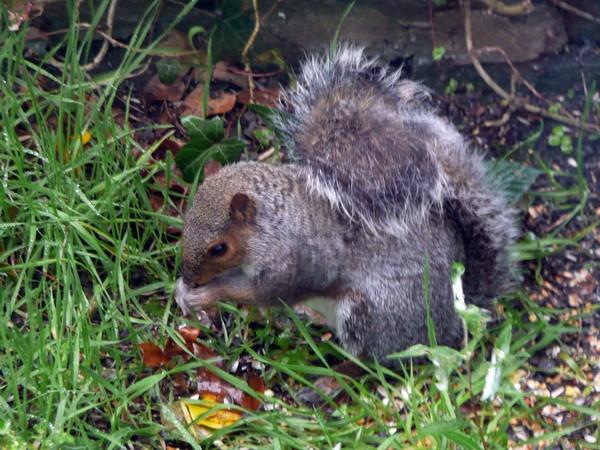 Cheeky Squirrel by robertrshield