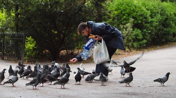 Feed The Birds by chensuriashi