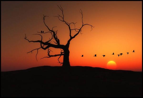 Sunset by willshot
