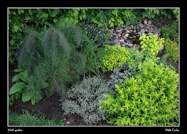 Herb garden by oldgreyheron