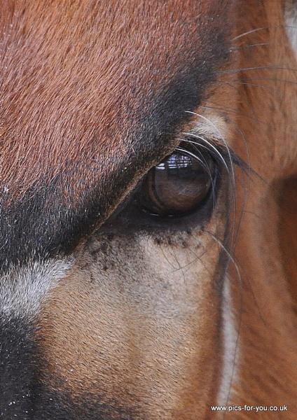 Bongo eye... by nickyv32