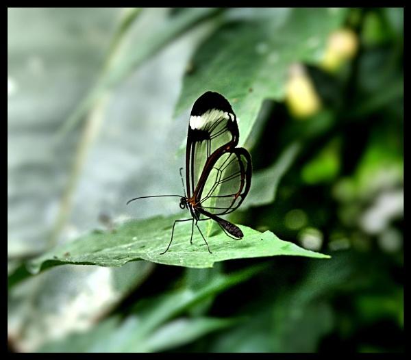 Butterfly at last by jonny_greentree