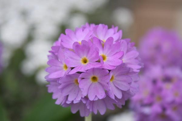 Flower by liamfarrelly