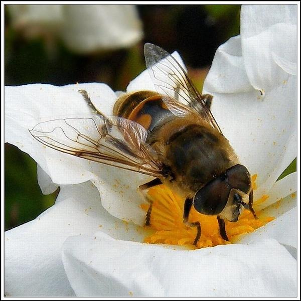 Bee-Behaviour. by rpba18205