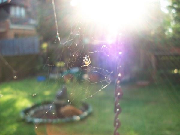 SpiderFlash by ClareDavid