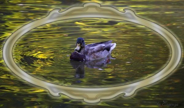 duck by Evgenya