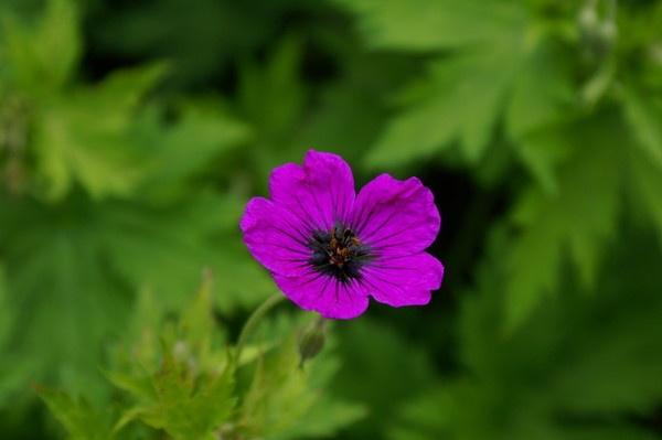 Lone Flower by stevec85