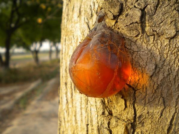 gum out by jaindevansh