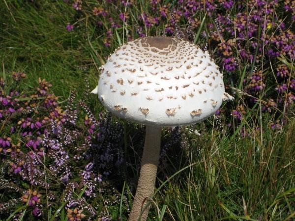 Fungus... by SteveBaz