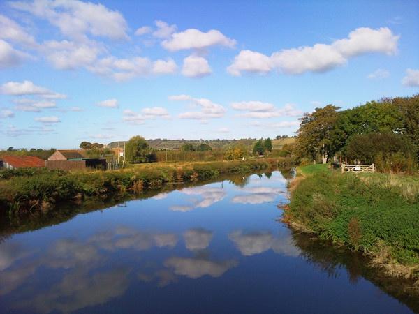 river parrott by pinkpenguin