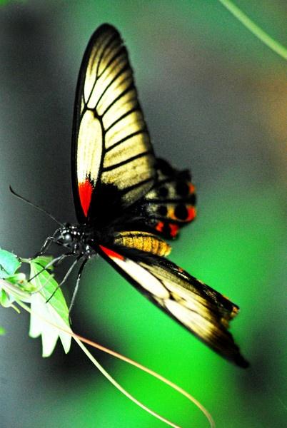 pretty wings by am52