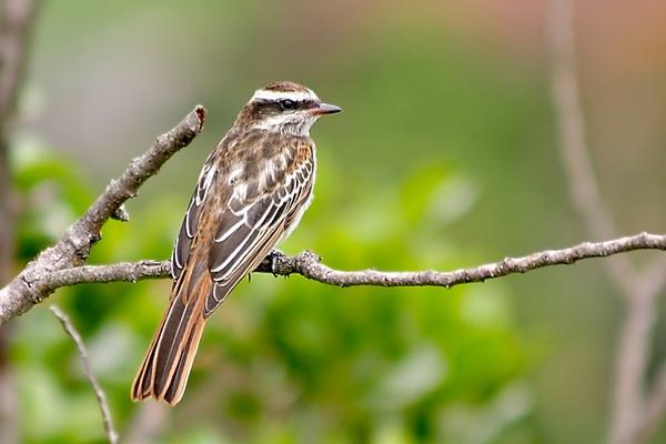 Little Bird by luizdasilva