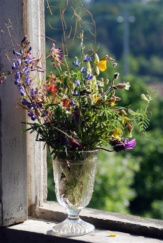 wild flowers by HarrietH