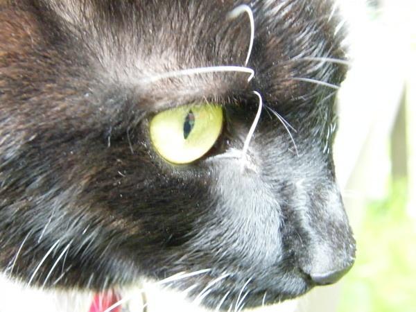 Eye eye Millie by Gid