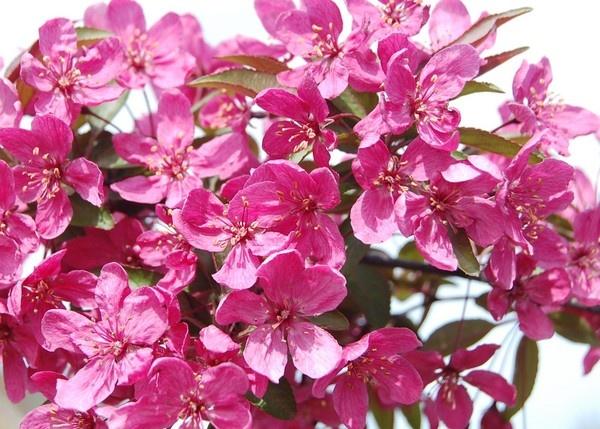 April Pink by Dizize