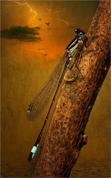 Zygoptera by Dave_Henderson