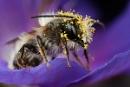 Pollen Loaded 2 by alliec